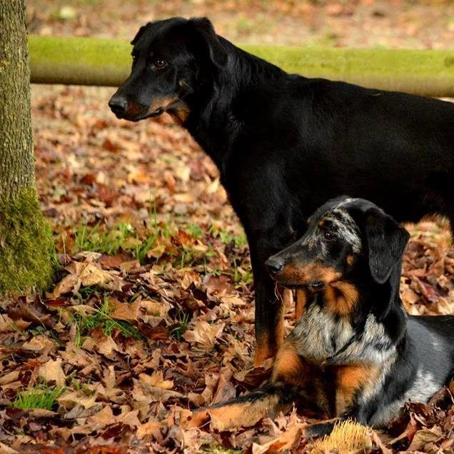 Portrait chiens 4